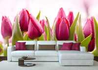 Фото: Фотообои для интерьера Тюльпаны